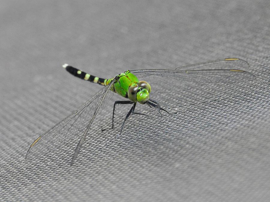 Tela anti-inseto